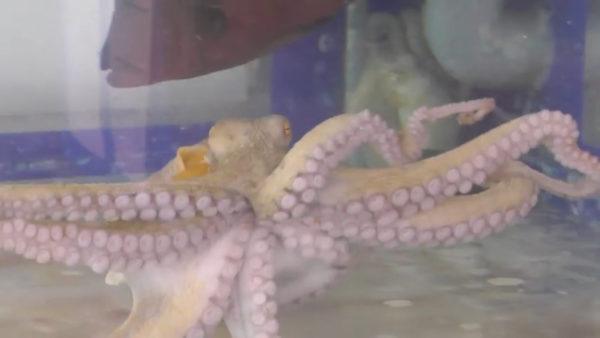 蛸の足の動きのように